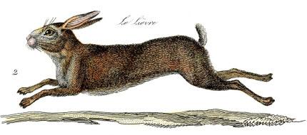 hare print graphics fairy