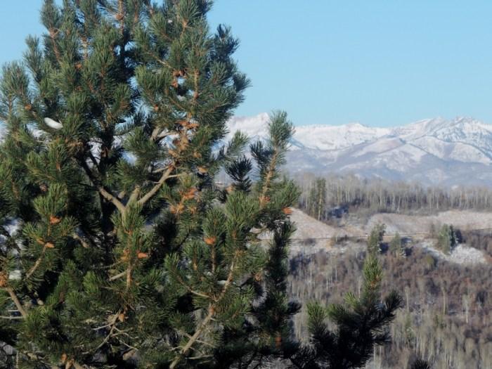 Quilt Bliss: Views