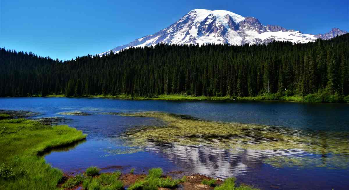 PhotoPOSTcard:  Mount Rainier Reflection
