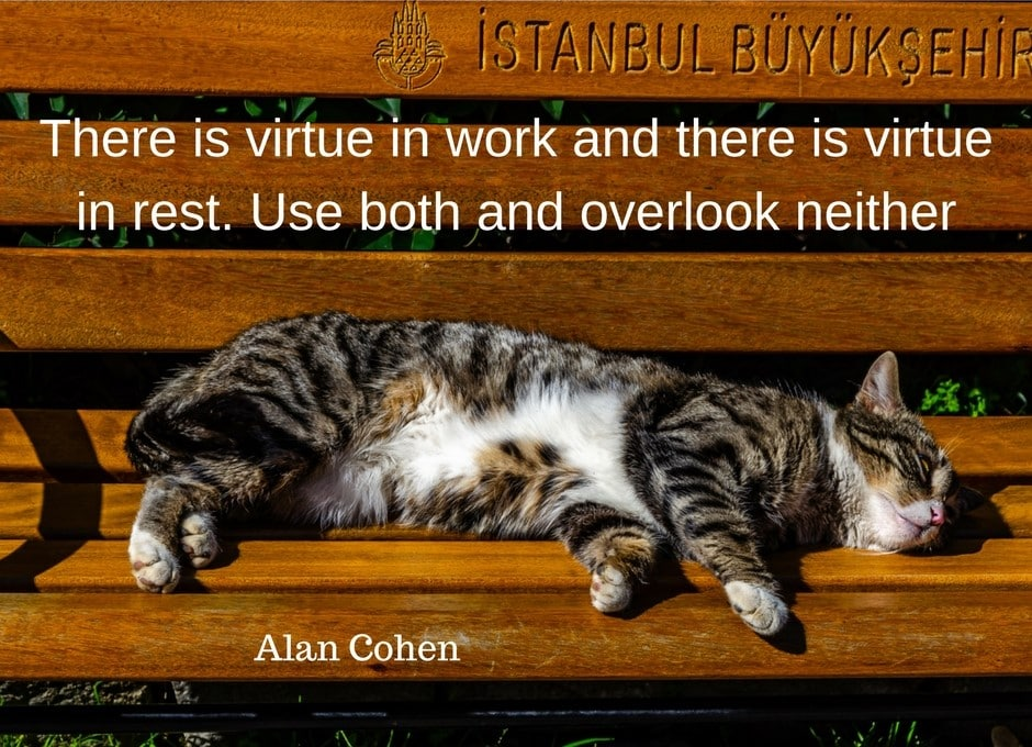 Cat in Istanbul #istanbul #cats #istanbulcats