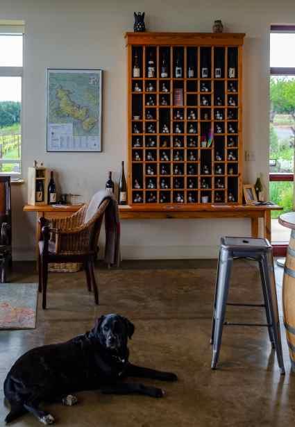 Ncgee, the Raptor Ridge winery mascot