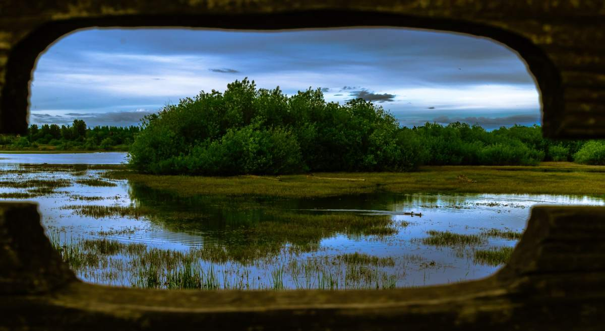 PhotoPOSTcard: Peeking Into Jackson Bottom Wetlands