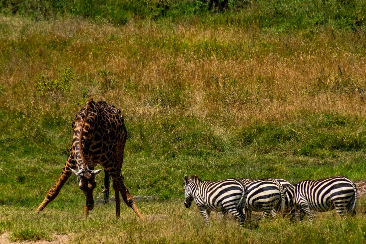 This is Africa: On Safari in the Maasai Mara Reserve – An Experience of Many Firsts