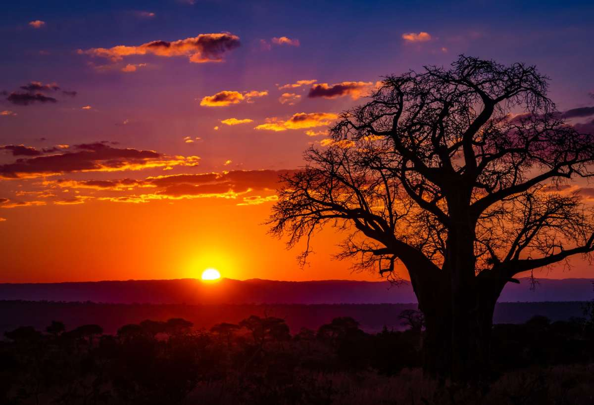 PhotoPOSTcard: A Baobab Sunset