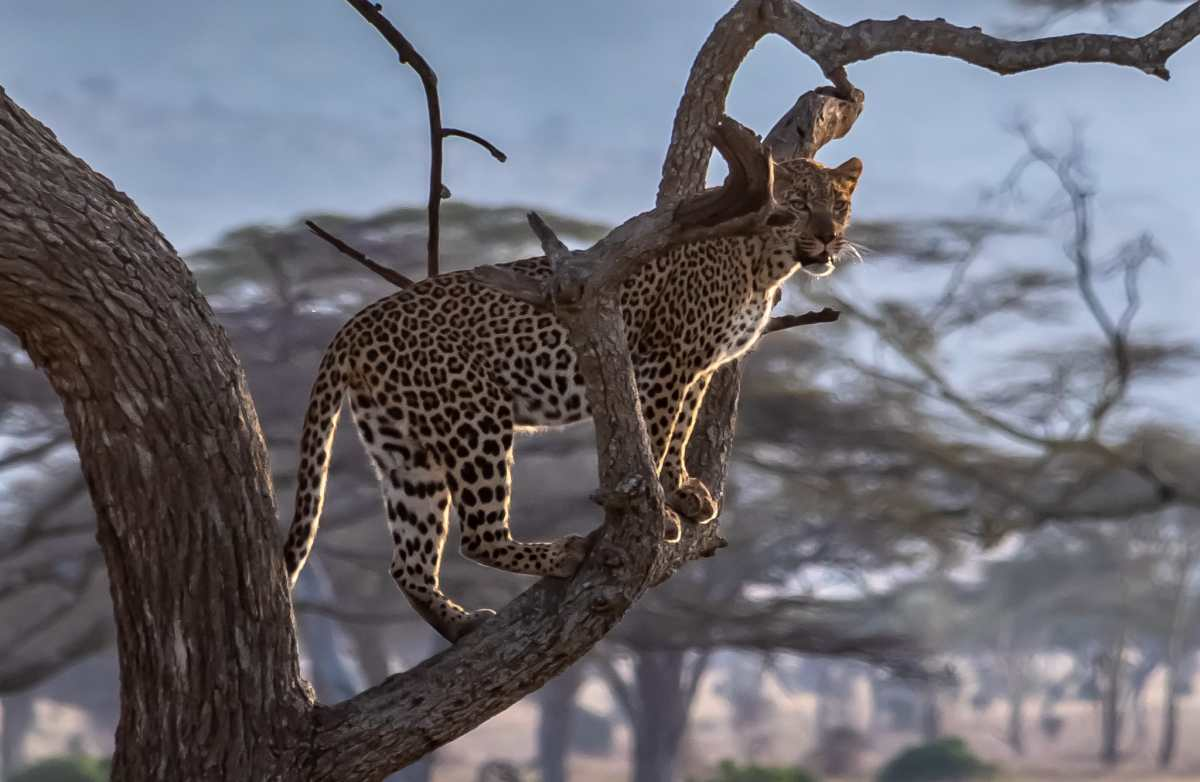 PhotoPOSTcard: Our Special Leopard Sightings