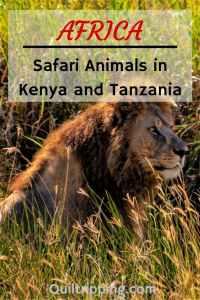 A safari in Kenya and Tazani should be more than jus seeing the BIG 5. I share my photos of the many African animals that I encountered. #safari #africa #kenya #tanzani
