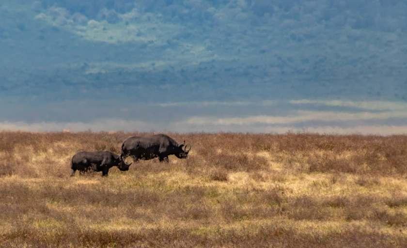 black rhino mom and youth