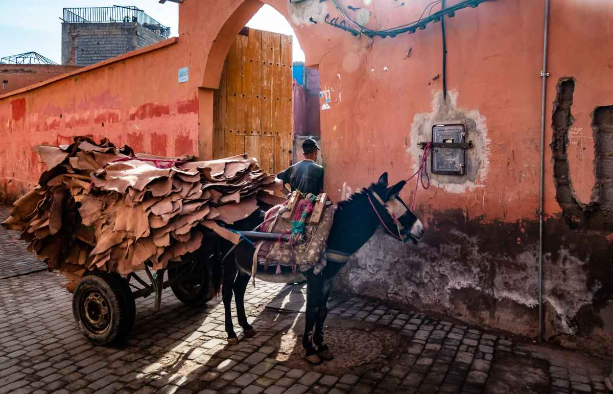 Donkey and cart at the tanneries in the Marrakesh medina