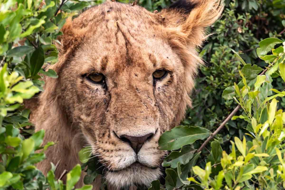 Into Africa – A Perfectly Wild Day On a Masai Mara Safari