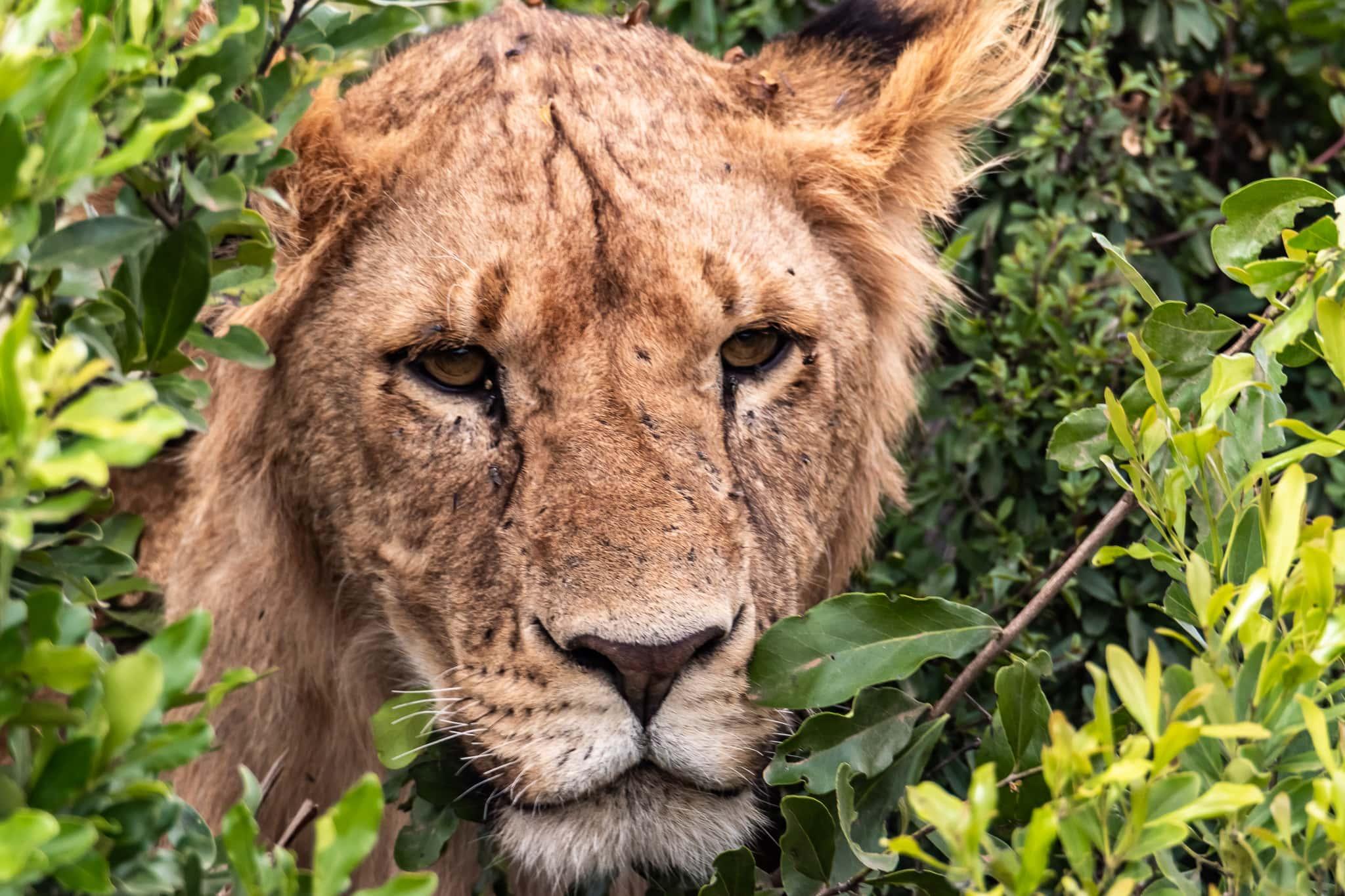 A day in the Masai Mara