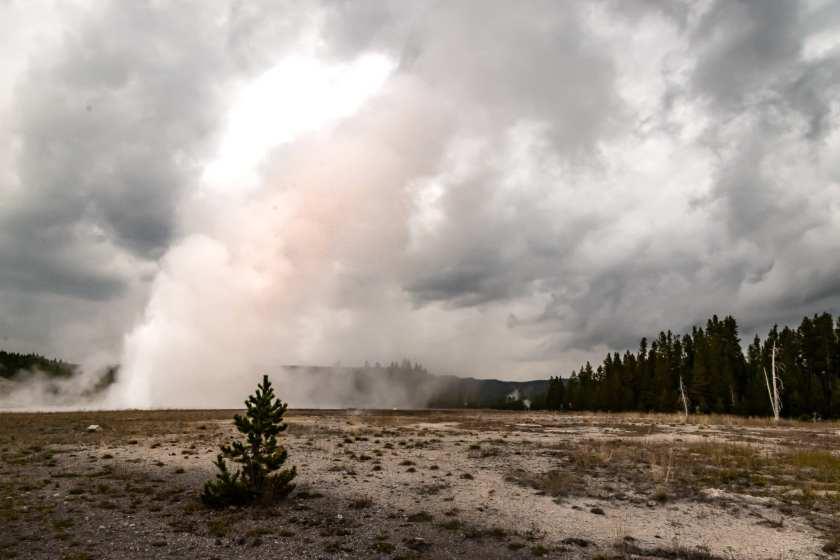 Daisy Geyser erupting
