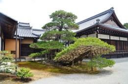 Maizuru GoldenPavilion