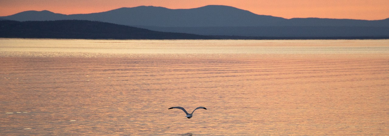 Seagull-on-Great-Averill-Lake