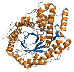 Beta amilasa, del grupo de enzimas descritas por primera vez por Payen