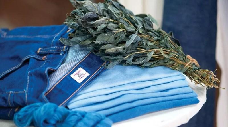 Hojas de I. tinctoria junto con prendas de vestir teñidas con indigo