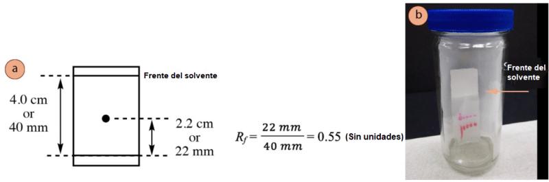 Figura 1: a) Ejemplo de cálculo de Rf, b) Apariencia del frente del disolvente en una placa de TLC eluyente.