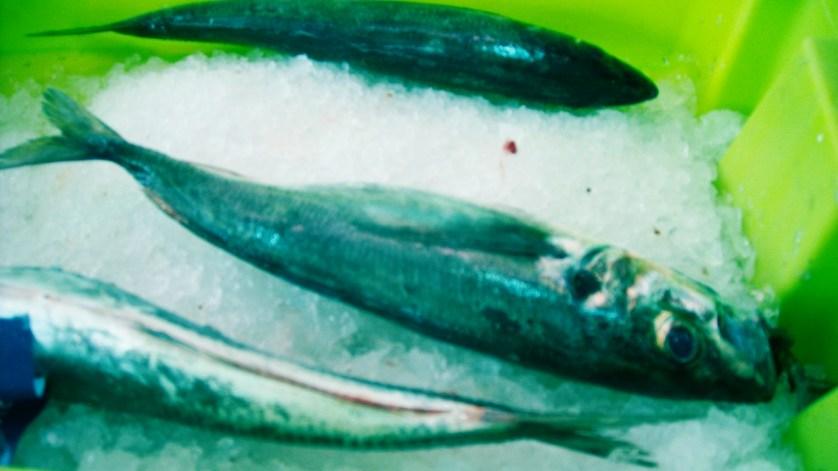 pescado congelado9