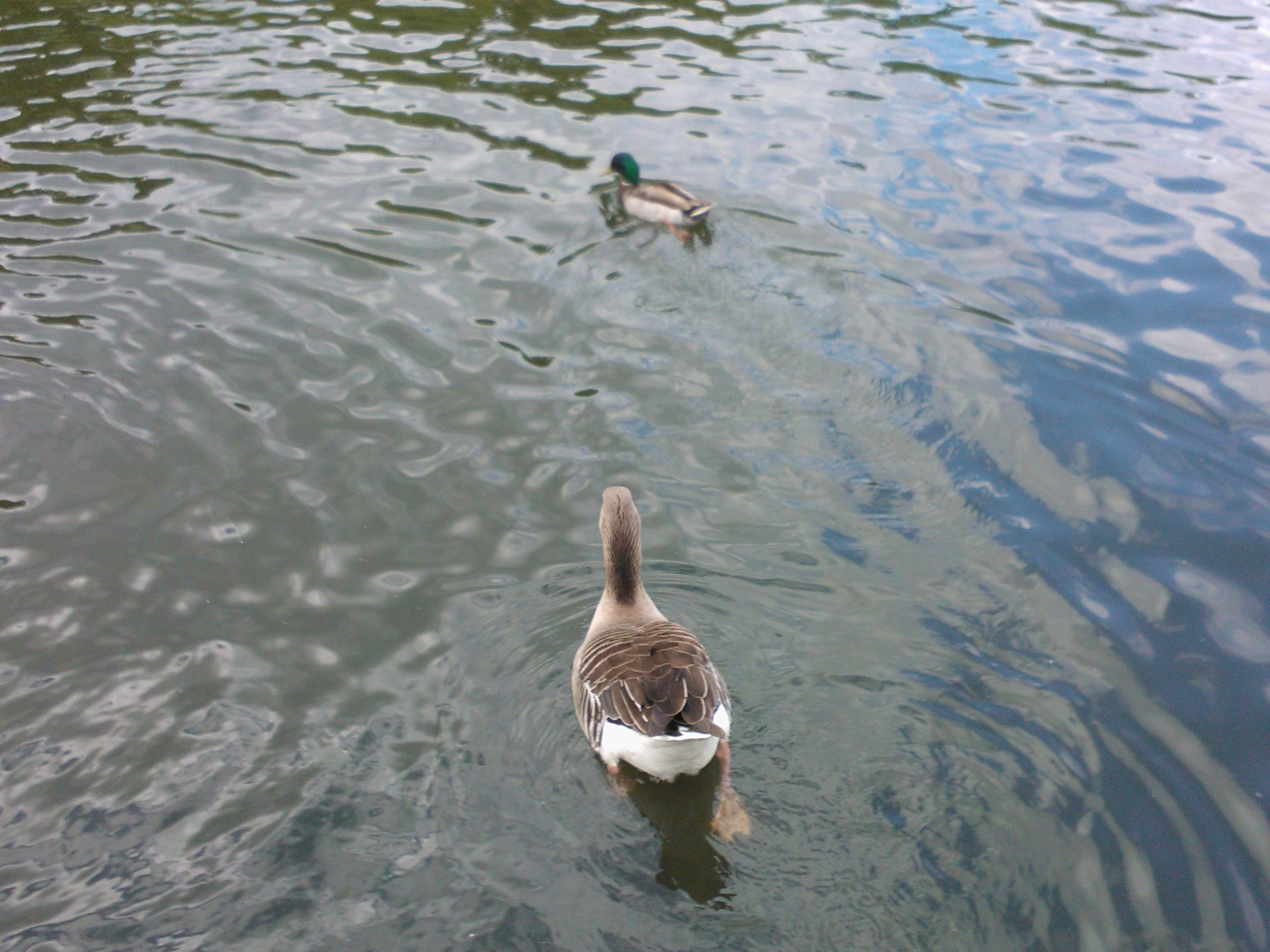 This is normally where a photo of two ducks would be. If you're not seeing these ducks, something has gone terribly wrong.