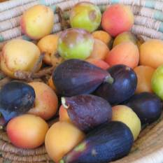 chile garden figs and other fruit