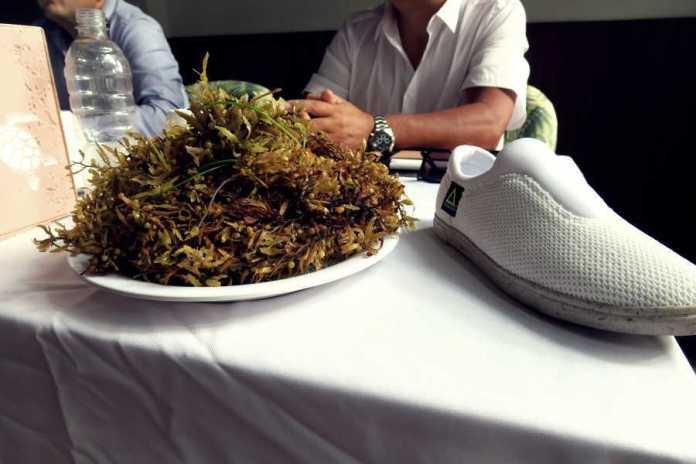 Presentan zapatos fabricados con sargazo y PET