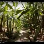 No correr das águas: Agrofloresta