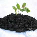 Biochar Carvão ativado para ajudar na fertilidade do solo.
