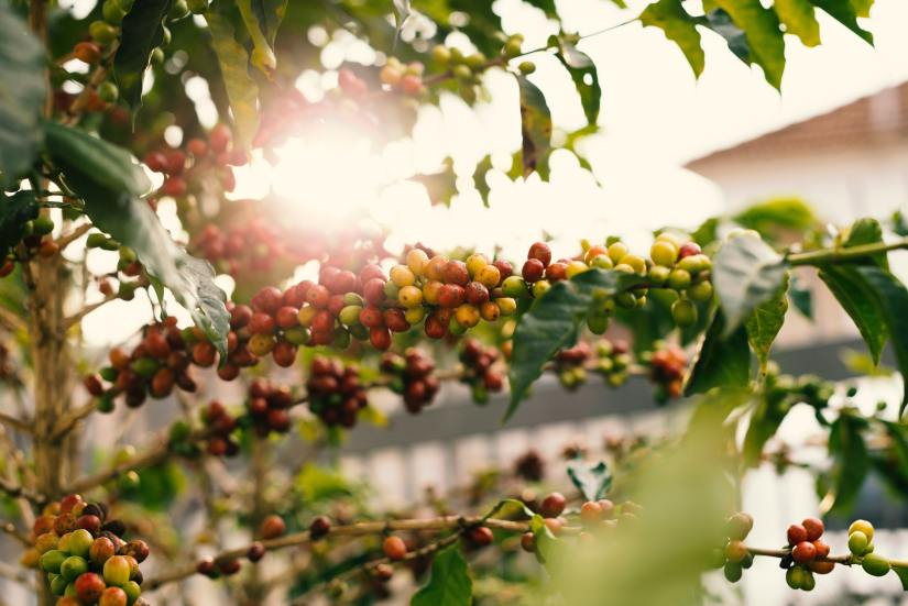agriculture-berries-blur-1556665