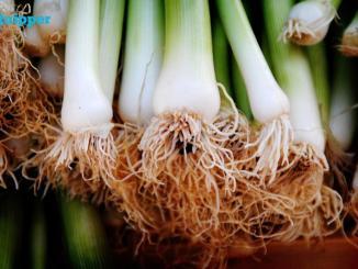 11 Contoh Laporan Morfologi Tumbuhan dari Modifikasi Akar Biologi