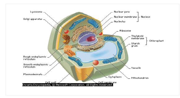 Belajar Biologi? Ini Morfologi Tumbuhan Lengkap dengan Struktur Tubuh dan Anatomi