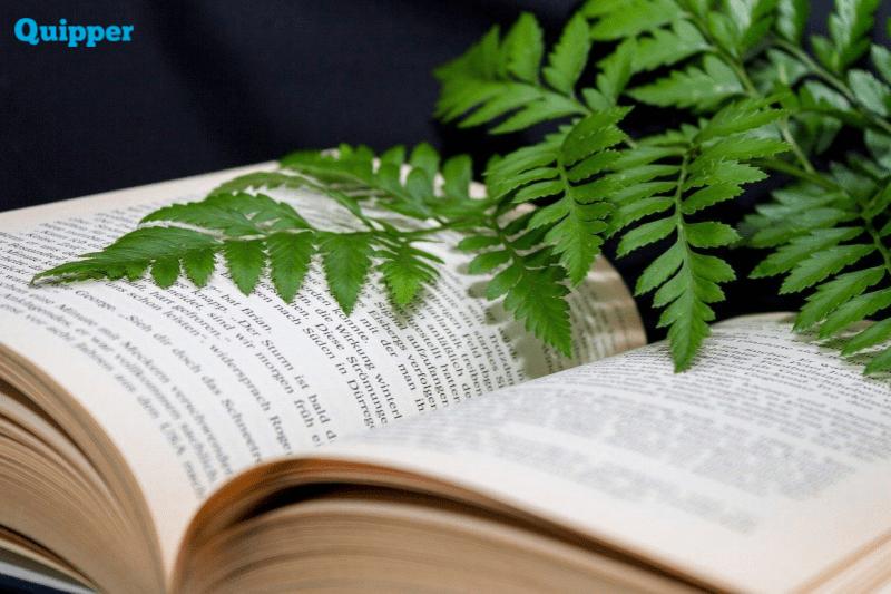 Jaringan Tumbuhan - Biologi Kelas 8 | Quipper Blog