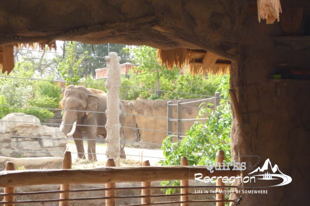 Denver Zoo - Bunk with the Beasts - Elephant Passageway