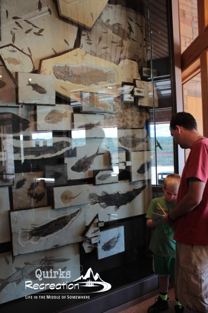 Visitor center display at Fossil Butte National Monument