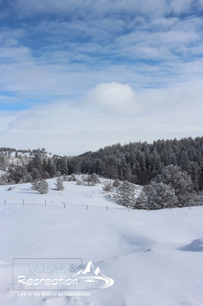 Snowy Wyoming hillside with trees