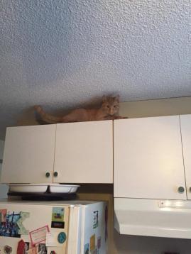 Sammie above cupboards