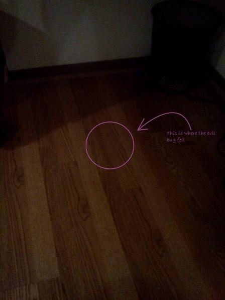 No bug on the floor