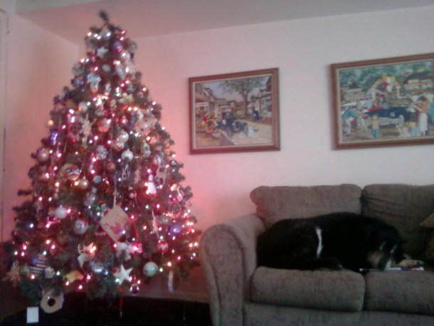 Sleeping dog Christmas tree