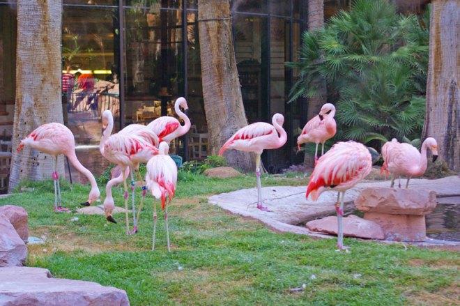 flamingo-habitat-las-vegas