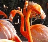 florida-flamingoes