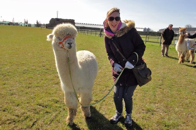 We're going on adventure? alpaca my bags!