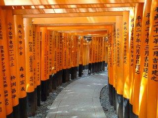 torii-gate-in-kyoto