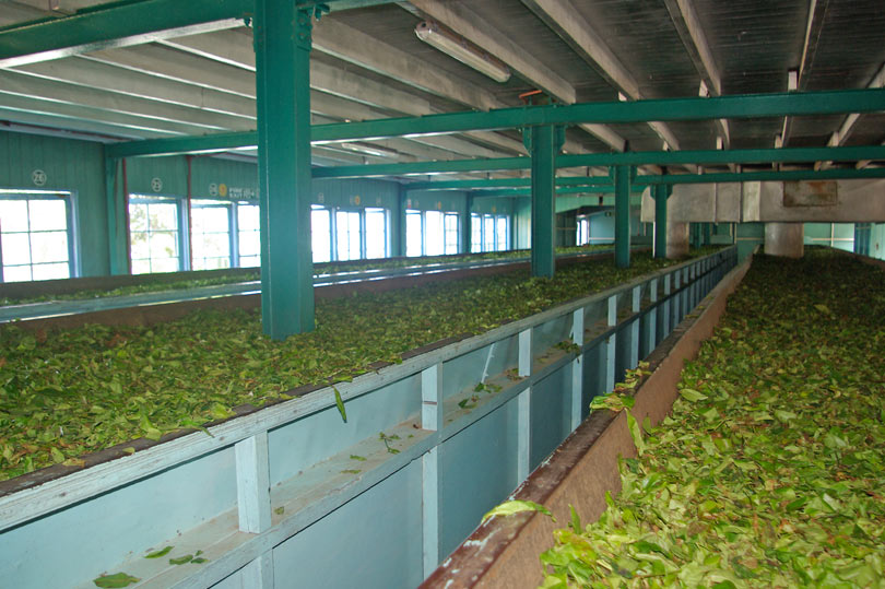 Tea factory in Sri Lanka