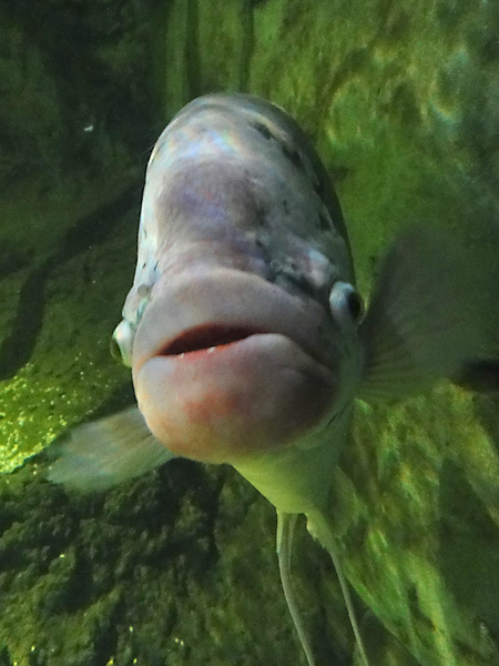 Celebs ain't got nothing on this fish with the perfect pout