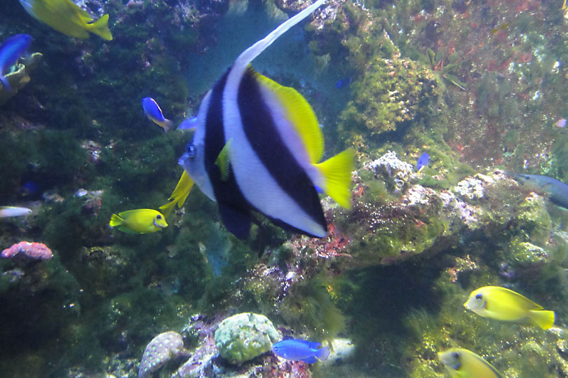 Colourful fish at the aquarium in London