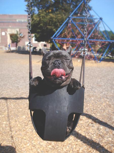Cute dog on a swing