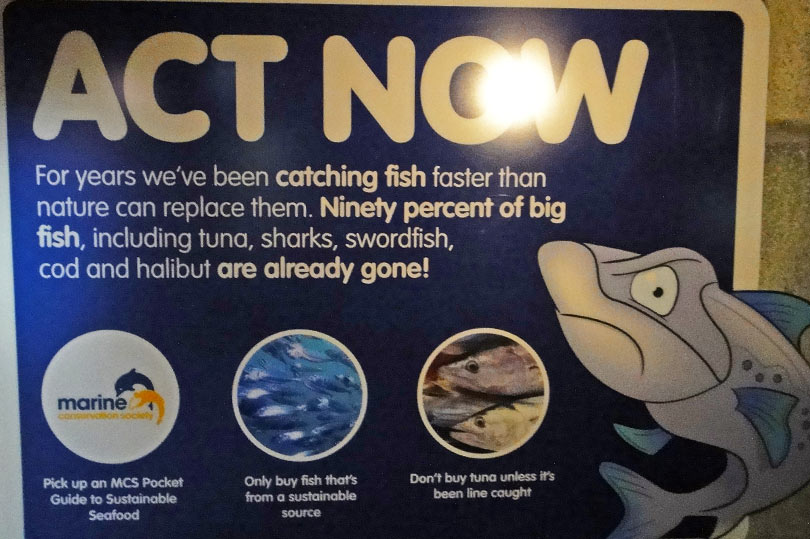 90% of big fish including tuna, sharks, swordfish, cod and halibut are already gone!