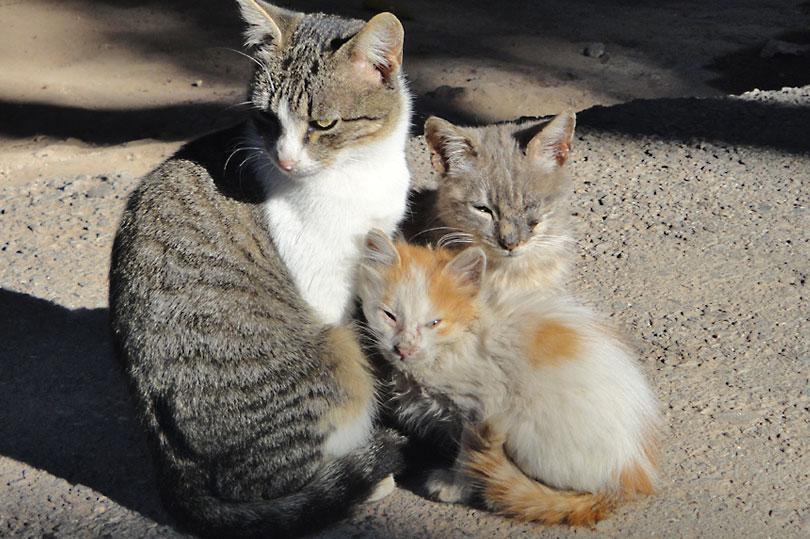 3 little kitties outside the Bahia Palace in Marrakech, Morocco