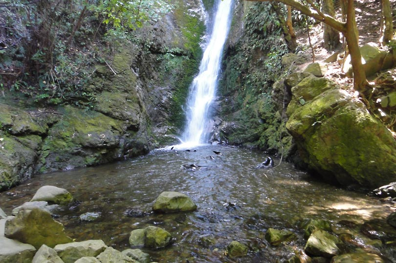 Ohau waterfall - a beautiful place to see seal pups swimming
