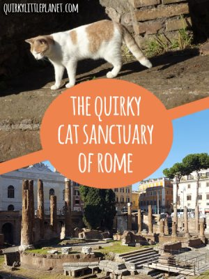 The quirky cat sanctuary of Rome - something not to be missed for all those crazy cat folk out there!