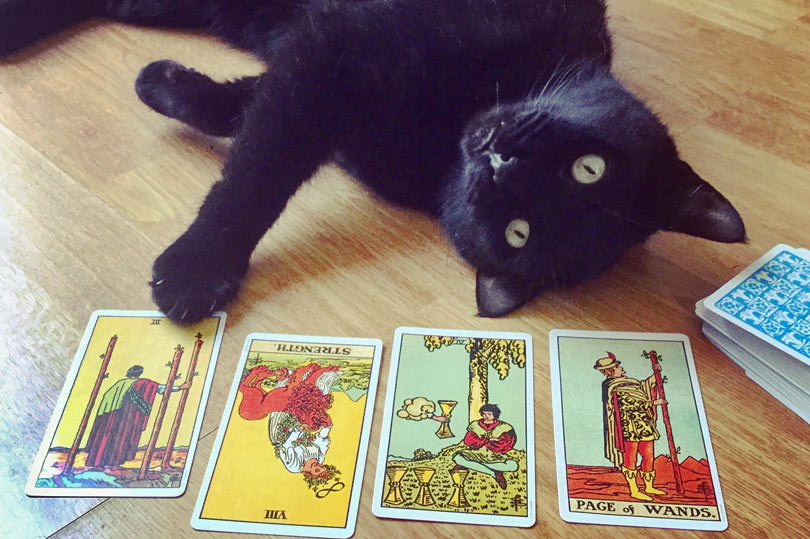 tarot reading for a black cat