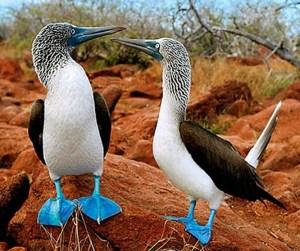 Animals in Galapagos - Travel Ecuador | Quirutoa